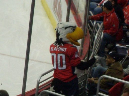 Slapshot the Eagle is victorious!