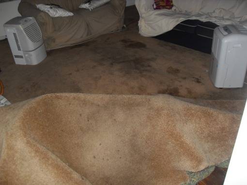 carpet lump and stained carpet